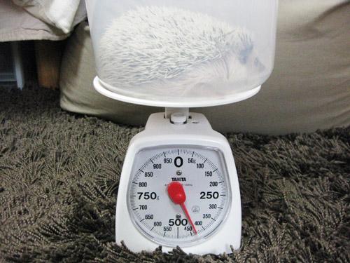 体重測定(2008/11/16)