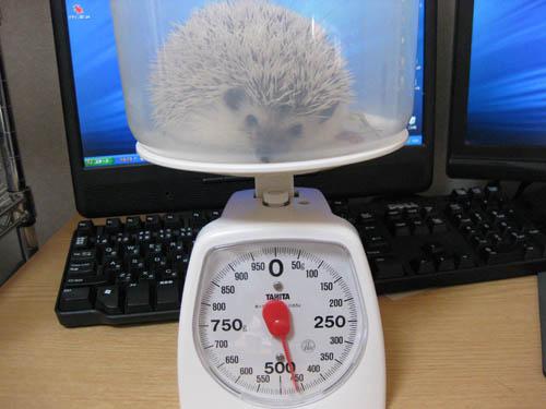 体重記録(2008/11/22)