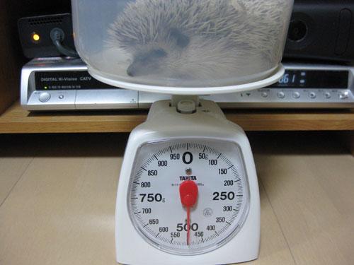 体重測定(2008/11/30)
