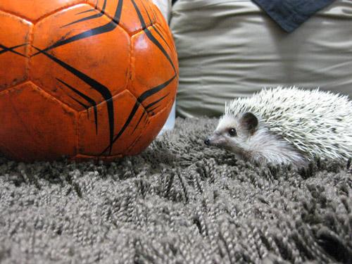 サッカーボールとハリソン