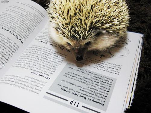 本を読むハリソン