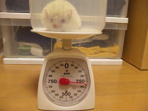 ベス体重測定(2009/09/24)